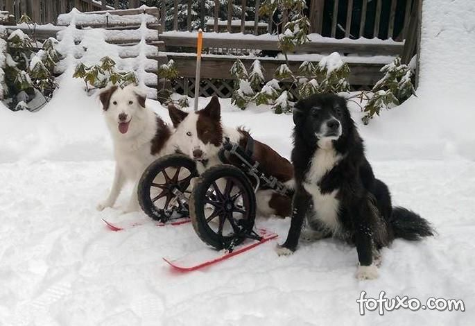 Cachorro ganha cadeira de todas para brincar na neve