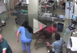"""Veterinária aparece """"montando"""" em cachorro"""