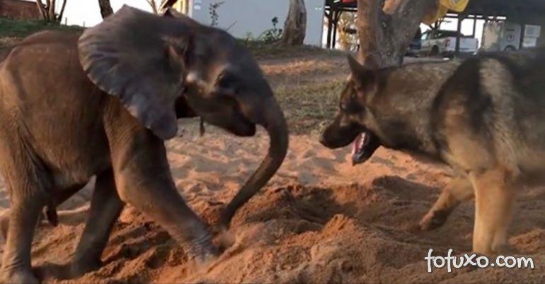 Vídeo conta história de cachorro que ajudou bebê elefante