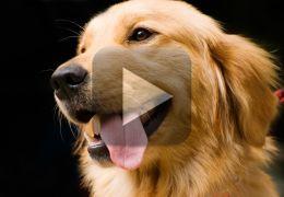 Vídeo flagra cachorro destruindo apartamento