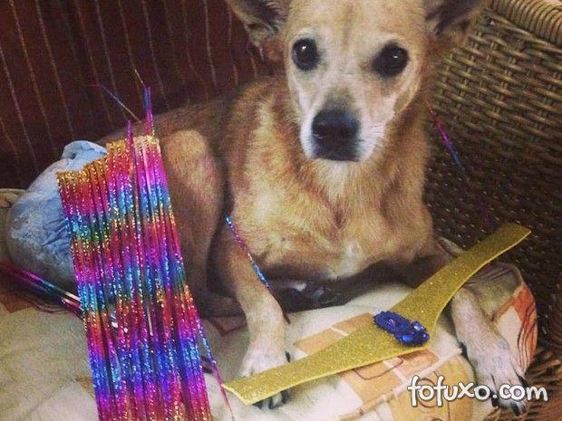 """Cachorro com paralisia imita """"Globeleza"""""""