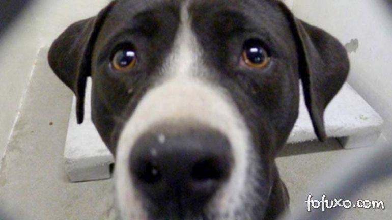 Ação coloca animais para adoção em vitrines de pet shops