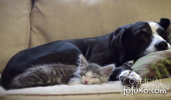 Vídeo mostra uma cadela que ama gatos
