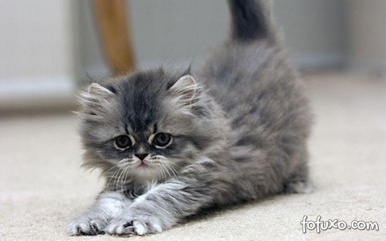 Entidade incentiva adoção de gatos