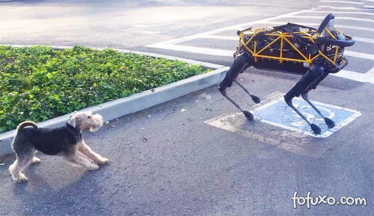 Cachorro enfrenta robô do Google