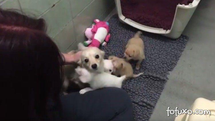 Vídeo mostra reencontro de mãe e seus filhotes
