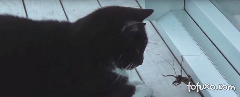 Gato enfrenta inseto gigante