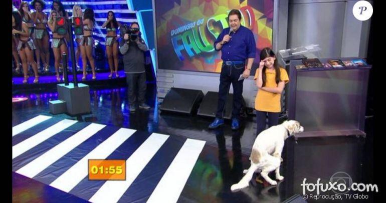 """Cachorro deixa uma pequena """"surpresa"""" no palco do Faustão"""