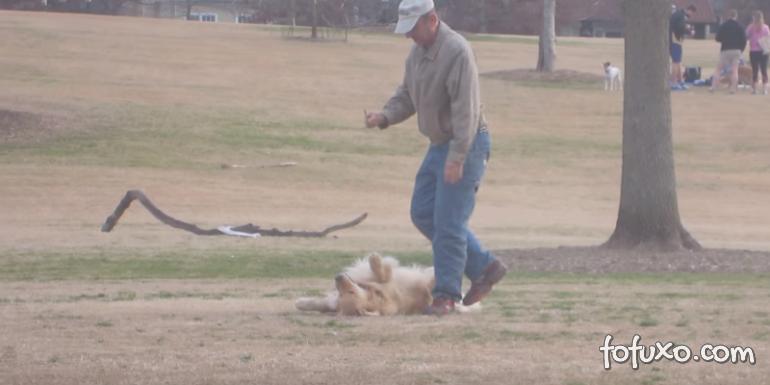 Cachorro se finge de morto e não quer ir embora do parque