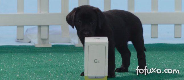 LG e Verizon promove Unboxing com cães