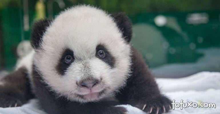 Panda posa para selfie e brinca com tratador