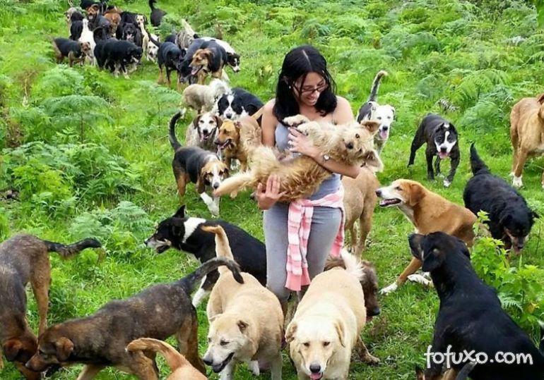 Conheça este verdadeiro santuário para cachorros