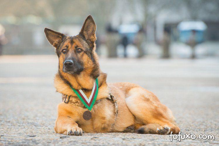 Cachorro recebe honraria rara