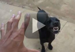 Cachorro fica nervoso com brincadeira