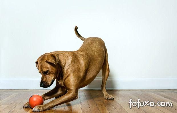 Vídeo mostra uma bola inteligente para brincar com cães e gatos