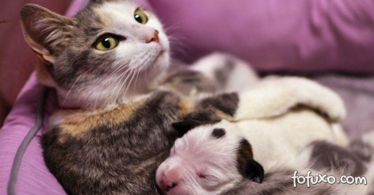Gata adota cachorro filhote