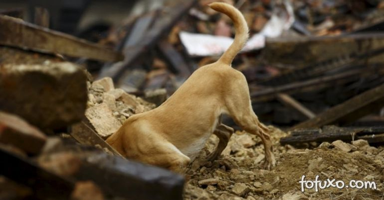 Imagens mostram resgate de cão dos escombros do terremoto no Equador