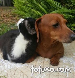 Cão fica amigo de gato que possui problemas de locomoção
