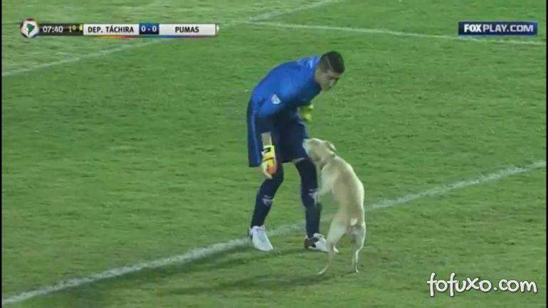 Cachorro fica muito feliz ao invadir jogo de futebol