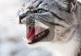 Confira compacto com gatos atacando coisas