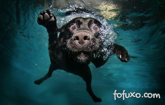 Cão atrapalhado cai de cara na piscina