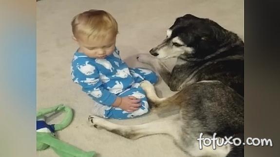 Confira a reação inusitada de cachorro quando bebê cai por cima dele