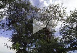 Vídeo mostra resgate de gato
