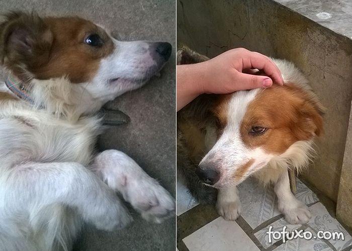 Cachorro finge ter deficiência