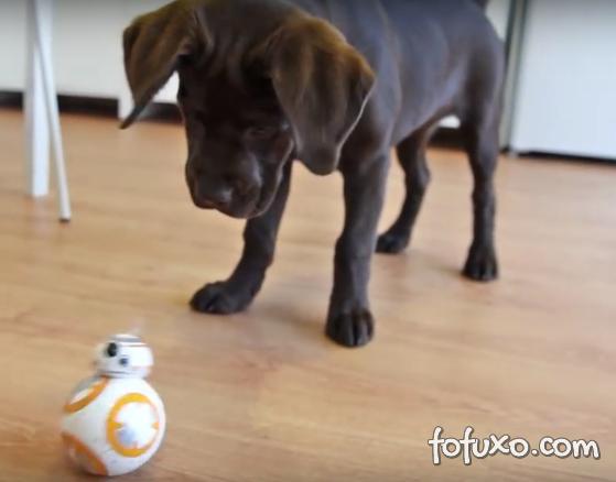 Cachorro brincando com um BB-8