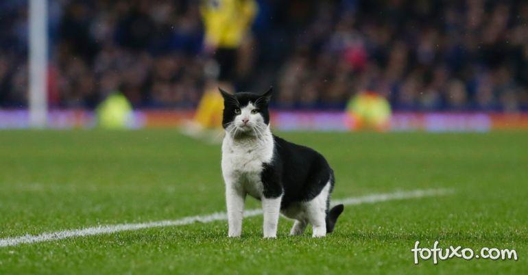 Gato quer entrar na partida de futebol