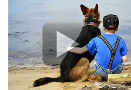 Menino invade casa para abraçar cão