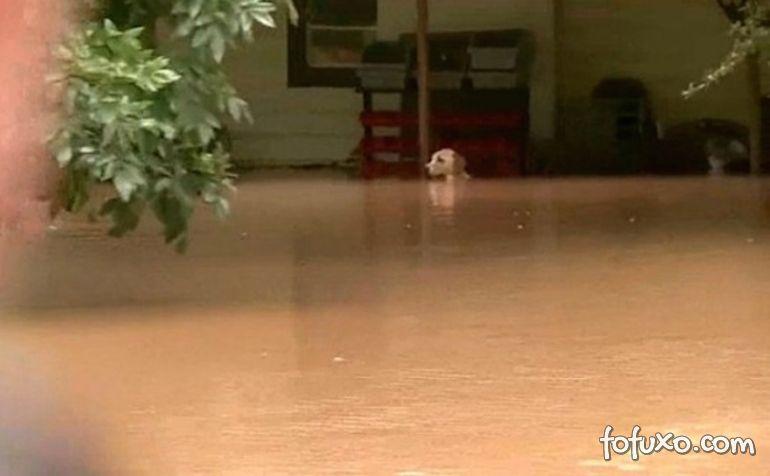 Cachorro é resgatado durante inundação