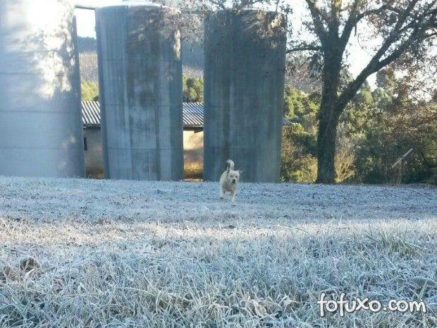 Cachorro brinca em grama coberta por gelo na Serra gaúcha