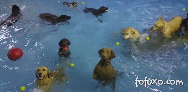 Cachorro não se diverte em festa da piscina