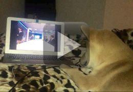 Cachorro faz sucesso na web sendo viciado em Netflix