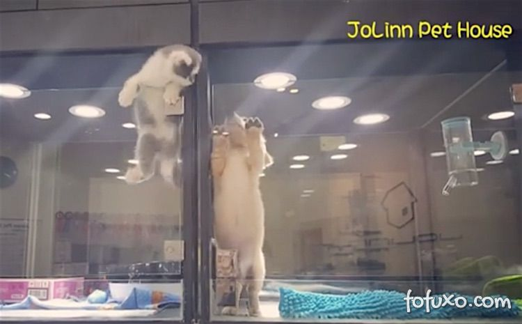 Gato escapa de vitrine para brincar com cachorrinho