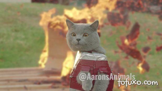 Conheça o Gato de Ferro