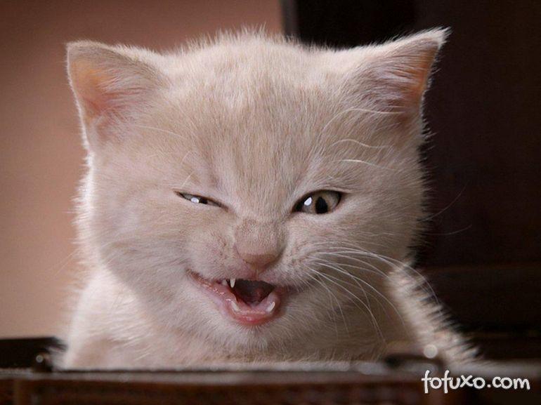 Vídeo narra dia da maldade de gato