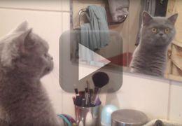 Vídeo mostra a relação complexa entre gatos e espelhos
