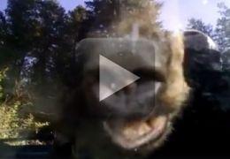 Família se depara com urso preso dentro do carro