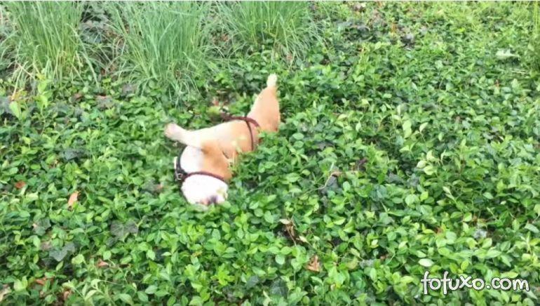 Cachorro se diverte rolando barranco