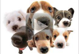 Vídeo mostra reencontro de cachorros irmãos