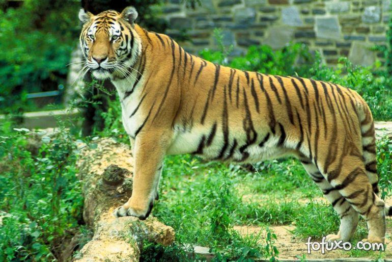 Mulher é atacada por tigre