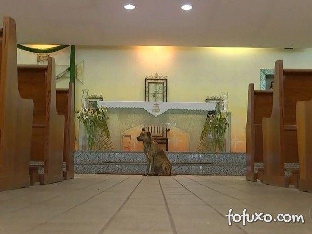 Cachorro brinca com roupa de frei