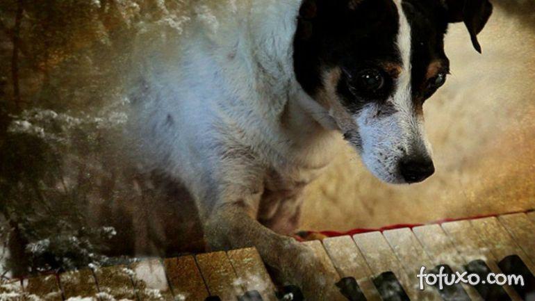 Documentário discute dor e perda de animais de estimação