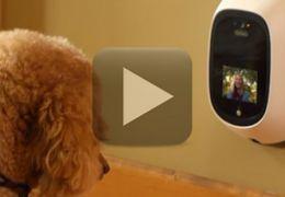 Equipamento permite que cães façam ligações para o seu dono