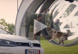 Volks transforma cães em fontes de energia para smartphones