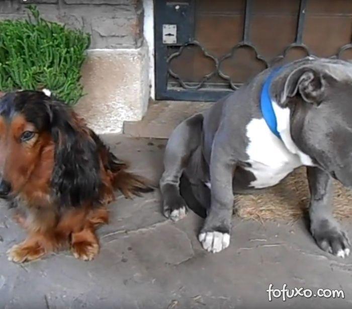 Cães são interrogados no caso da palmilha roída