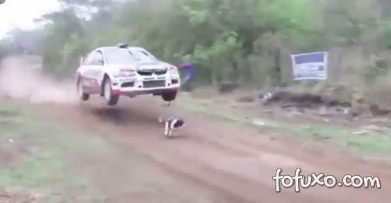 Cachorro escapa de acidente durante prova de rali