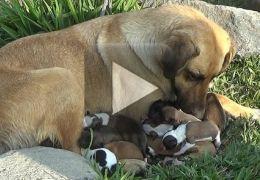 Cão e filhotes são resgatados das ruas do Peru